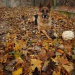 Jesienna panienka