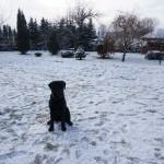 Snoopy zimowo
